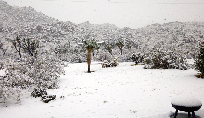 snow in Joshua Tree